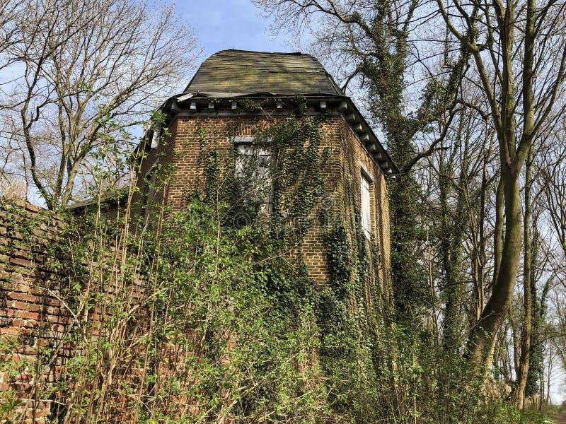 Vecchia casa nascosta coperta dall'edera e circondata dagli alberi, Belgio, Europa fotografia stock
