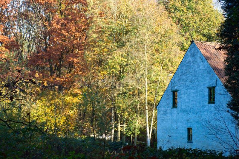 Vecchia casa spaventosa abbandonata in foresta immagini stock