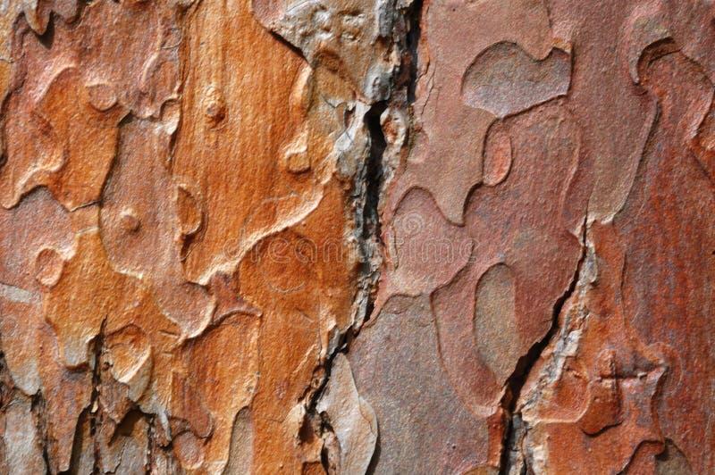Vecchia corteccia della quercia fotografie stock libere da diritti