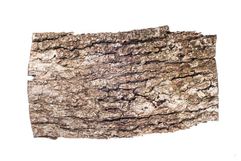 Vecchia corteccia della quercia isolata su fondo bianco, tamplate di progettazione, posto del testo immagine stock