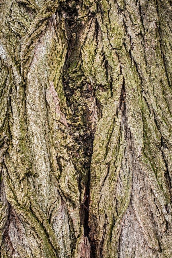 Vecchia corteccia di albero fotografia stock libera da diritti