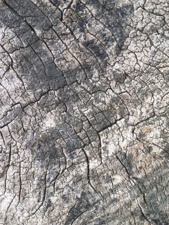 Vecchia corteccia di albero per fondo strutturato naturale immagini stock