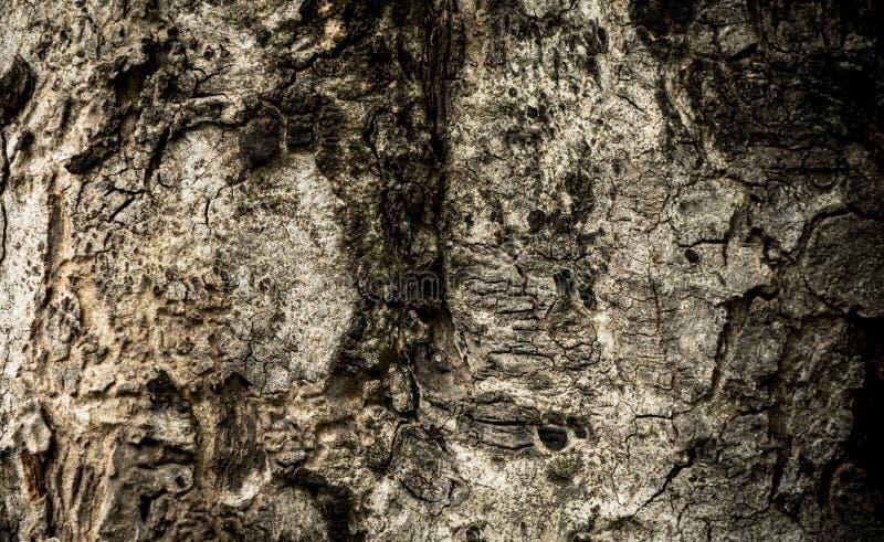 Vecchia corteccia di albero scura per il fondo di struttura fotografia stock