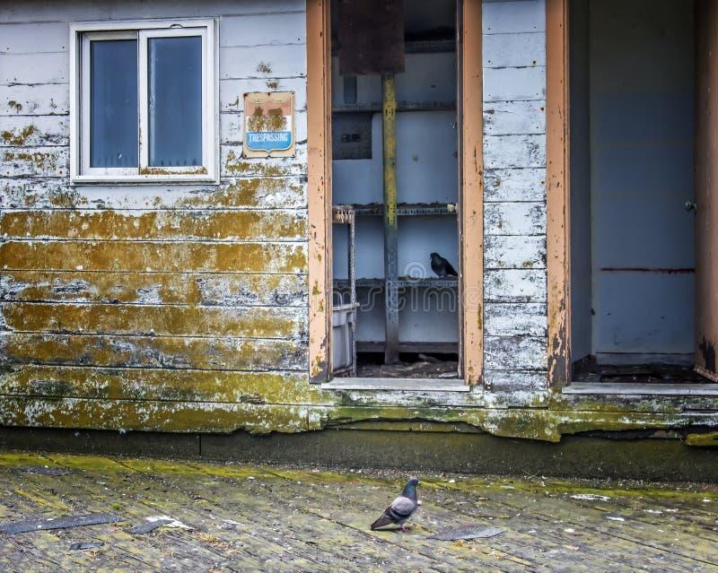 Vecchia costruzione di legno di decomposizione in California con i piccioni dentro immagine stock