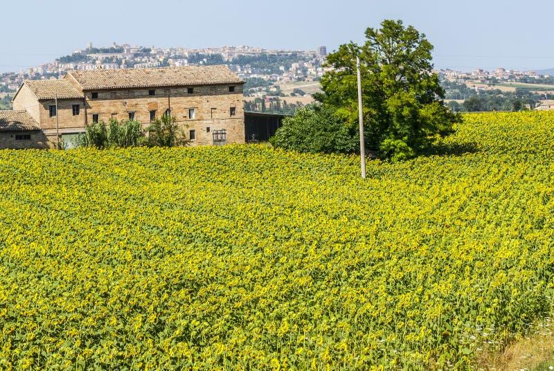 Vecchia fattoria e panorama di osimo fotografia stock for Nuovi piani di vecchia fattoria