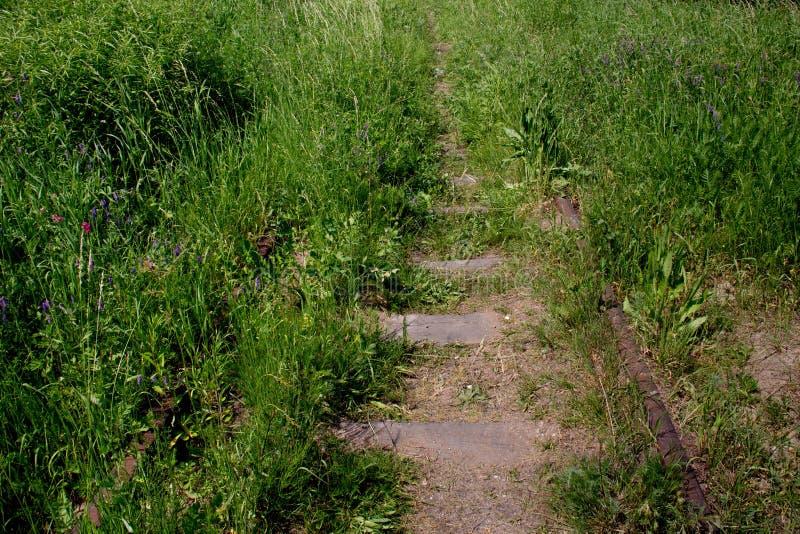 Vecchia ferrovia invasa con erba immagini stock