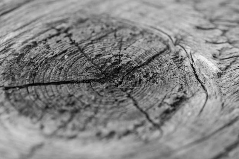 Vecchia, fine approssimativa di struttura di legno di pino sulla macro fotografie stock libere da diritti