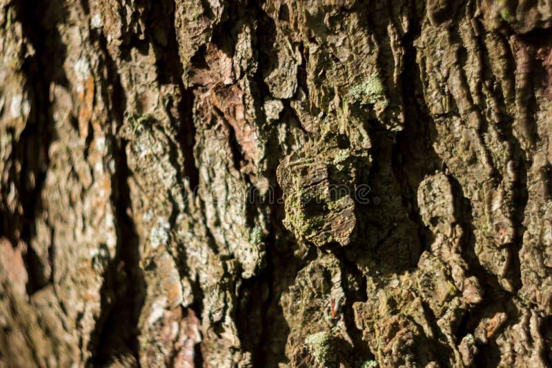 Vecchia fine misera di legno naturale del fondo su, vecchio fondo di legno, struttura di uso del legno della corteccia come sfond immagini stock