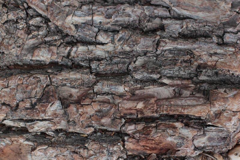Vecchia fine misera di legno naturale del fondo su, vecchio fondo di legno, struttura di uso del legno della corteccia come sfond fotografia stock libera da diritti