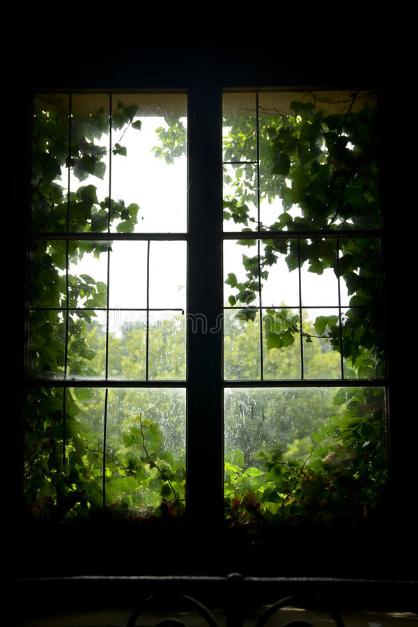 Vecchia finestra con le foglie verdi fotografie stock libere da diritti