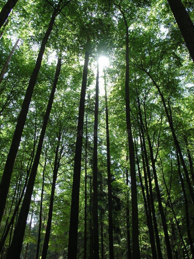 Vecchia foresta fotografia stock