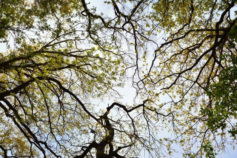 Vecchia foresta di Letea, Romania immagini stock libere da diritti