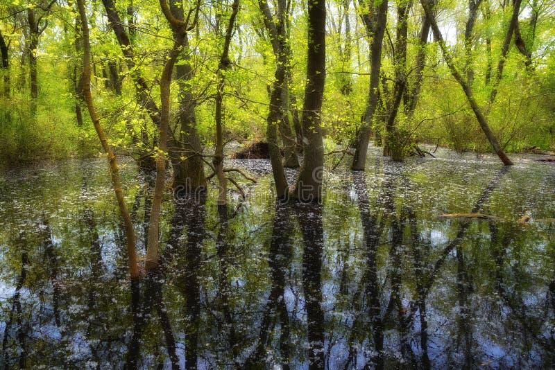 Vecchia foresta di Letea, Romania immagine stock