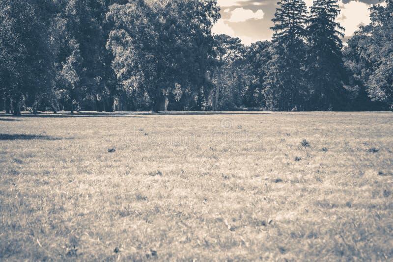 Vecchia foto dell'annata Radura dei tronchi degli alberi forestali del parco immagini stock libere da diritti