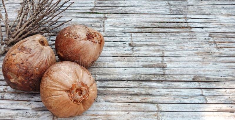 Vecchia frutta della noce di cocco di Brown fotografia stock