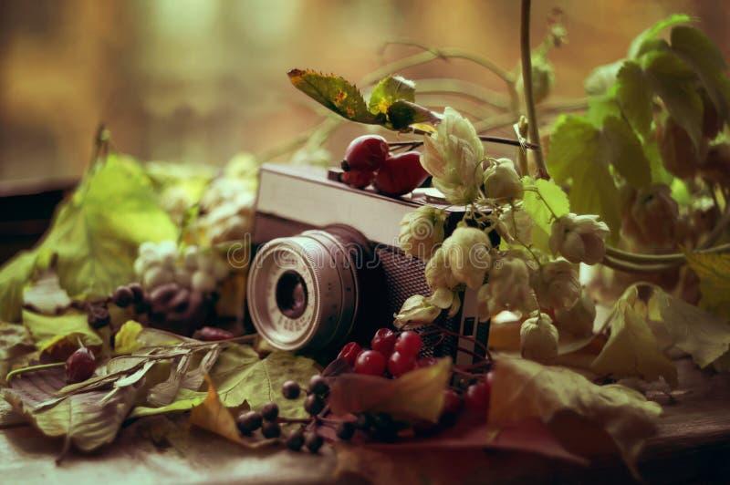 Vecchia macchina fotografica nel fogliame e nelle bacche di caduta fotografia stock libera da diritti
