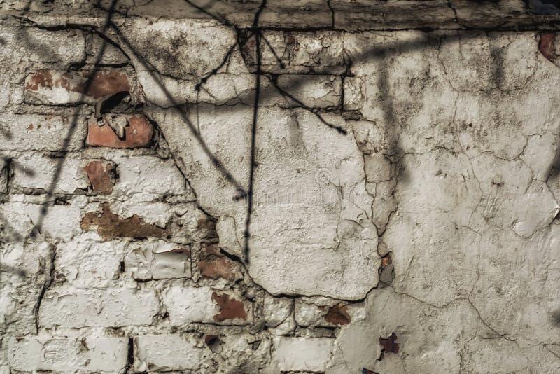 Vecchia parete della rottura con i colori luminosi e l'ombra del ramo Struttura immagine stock