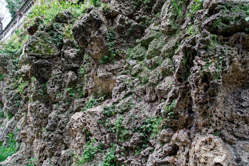 Vecchia parete di pietra con l'edera così backgroundgreen muschio sulla parete immagini stock