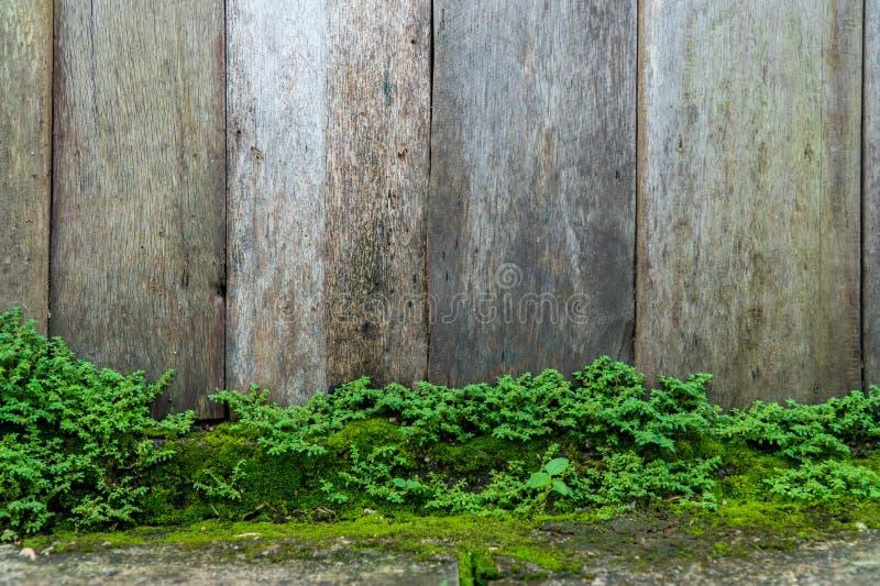 Vecchia parete di pietra grigia con il fondo verde di struttura del muschio immagini stock