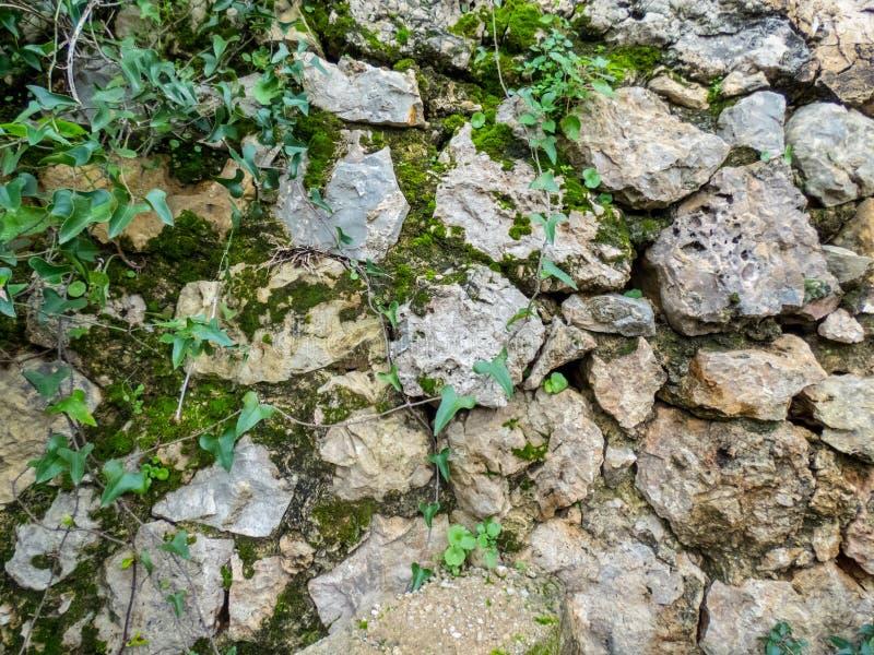 Vecchia parete di pietra invecchiata con le foglie verdi fotografia stock