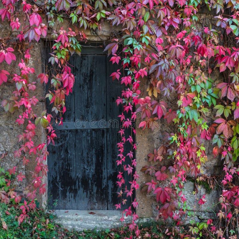 Vecchia porta di legno invasa con l'edera fotografia stock libera da diritti