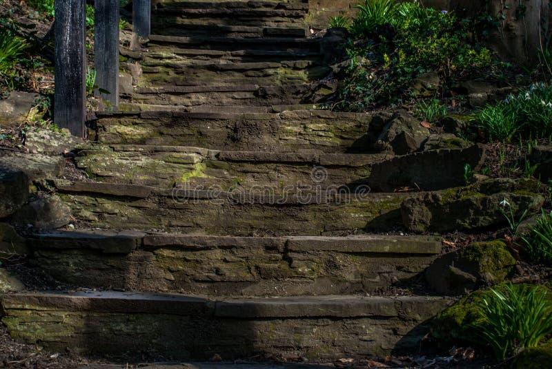 Vecchia scala di pietra attraverso il Forest Park fotografia stock libera da diritti
