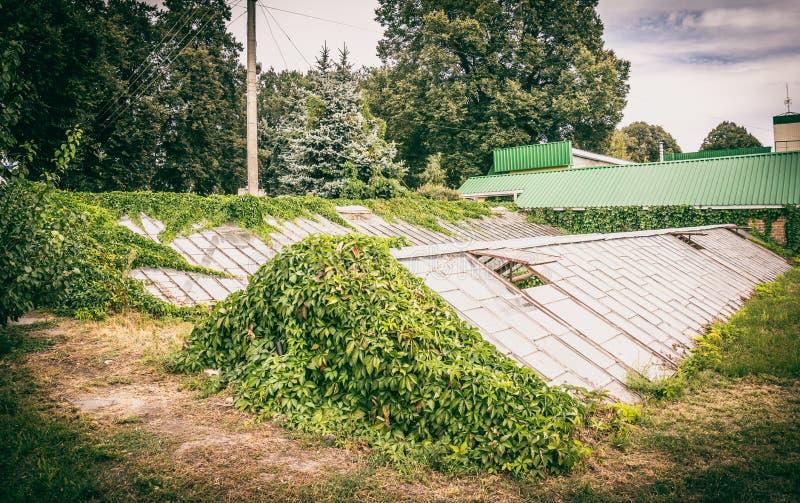 Vecchia serra nel giardino fotografie stock