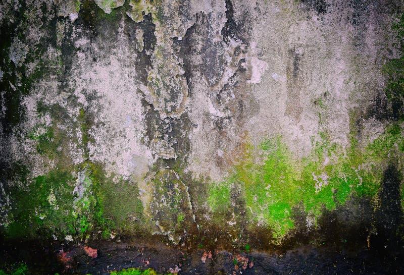 Vecchia struttura del fondo di lerciume di vecchio muro di cemento con pittura stagionata incrinata e tracce di strisce e di verd fotografia stock libera da diritti