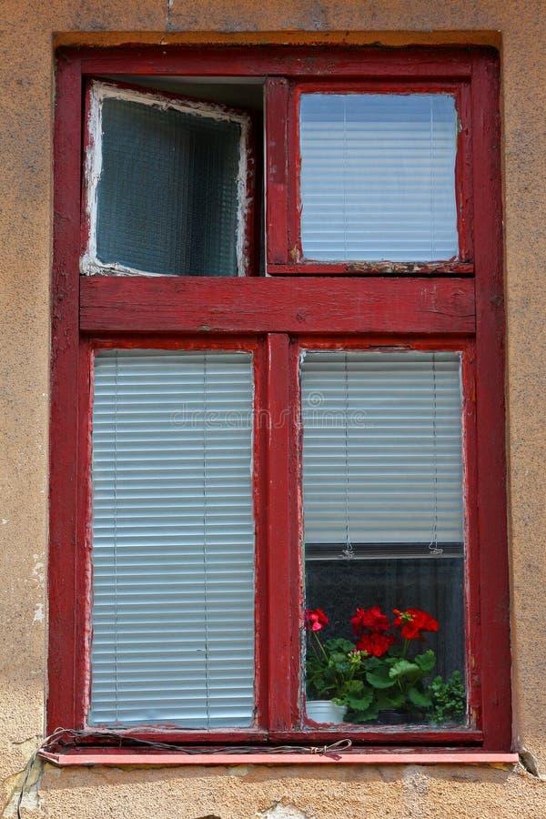 Vecchia, struttura della finestra dipinta rossa e gerani rossi immagine stock libera da diritti