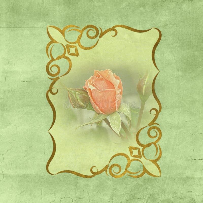 Vecchia struttura di carta d'annata per il lavoro dell'album per ritagli di arte con la rosa rosa royalty illustrazione gratis