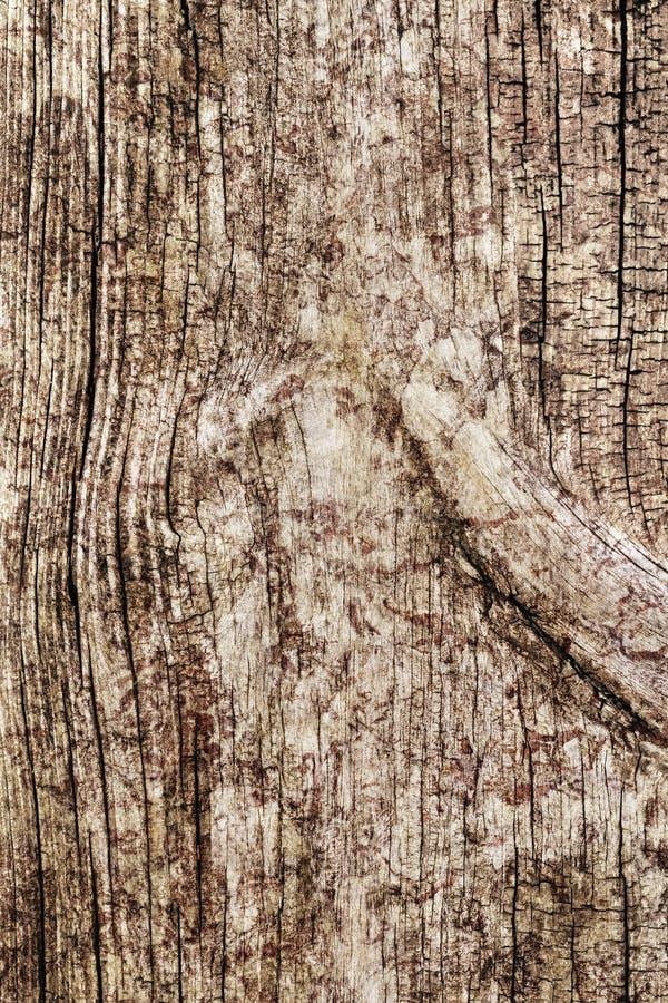 Vecchia struttura di legno annodata grezza incrinata marcia stagionata di lerciume immagine stock