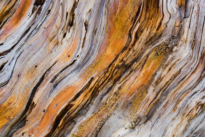 Vecchia struttura di legno dell'albero di pino fotografia stock libera da diritti