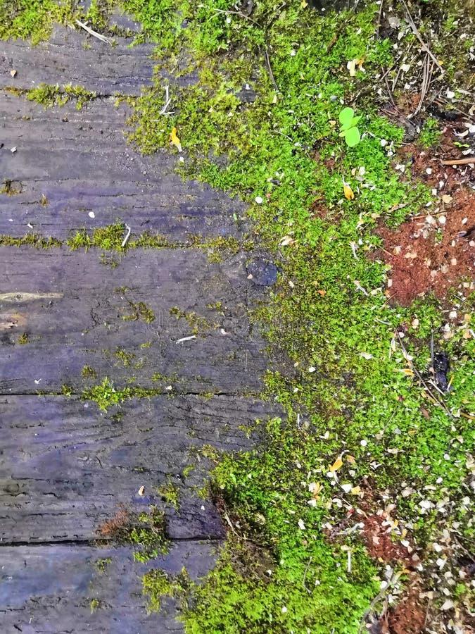 Vecchia superficie di legno del legname con il fondo verde delle foglie e muscoso immagini stock