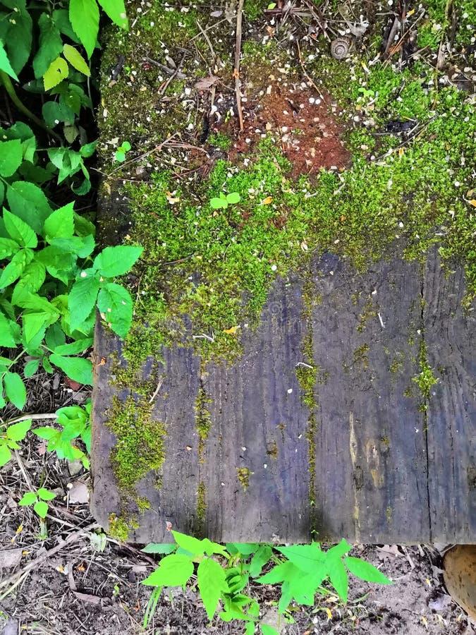 Vecchia superficie di legno del legname con il fondo verde delle foglie e muscoso fotografia stock libera da diritti