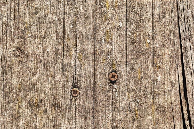 Vecchia superficie grezza annodata incrinata marcia stagionata di lerciume di legno di pino con Rusty Phillips Screws Embedded De fotografie stock libere da diritti