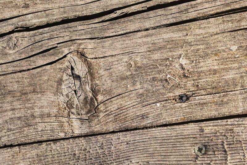 Vecchia superficie grezza annodata incrinata marcia stagionata di lerciume di legno di pino con Rusty Phillips Screws Embedded De fotografia stock