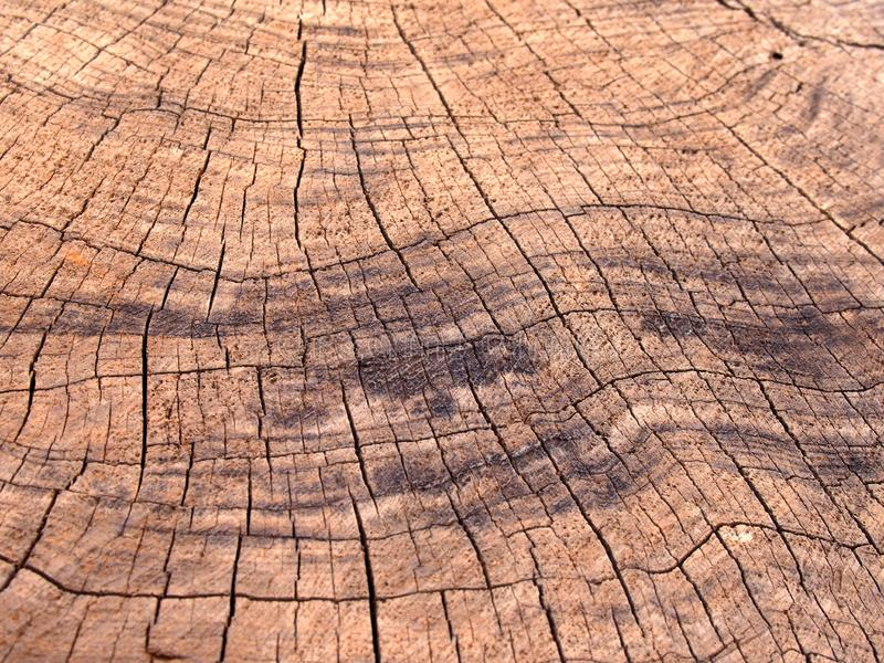 Vecchia superficie marrone approssimativa del legname con i segni più scuri e le crepe di bruciatura che seguono gli anelli di cr immagine stock