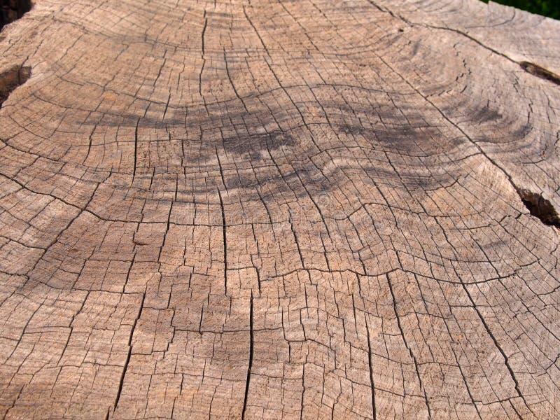 Vecchia superficie marrone approssimativa del legname di un albero tagliato con i segni più scuri e le crepe di bruciatura che se immagine stock libera da diritti