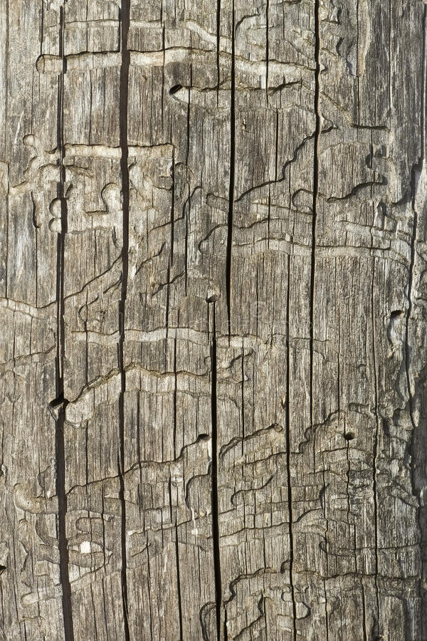 Vecchia superficie nociva di legno immagine stock libera da diritti