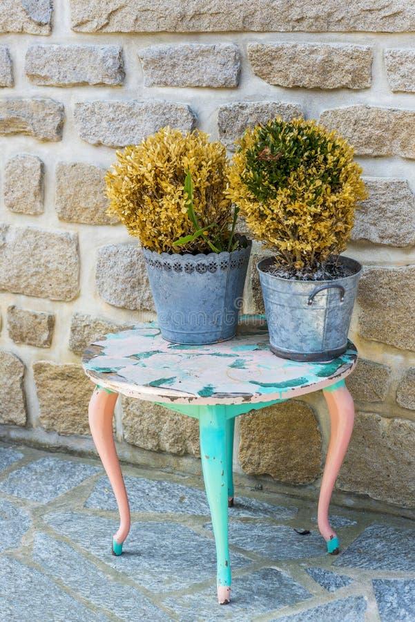 Vecchia tavola con le piante appassite fotografia stock