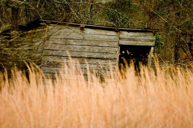 Vecchia tettoia di legno nascosta da erba alta immagini stock