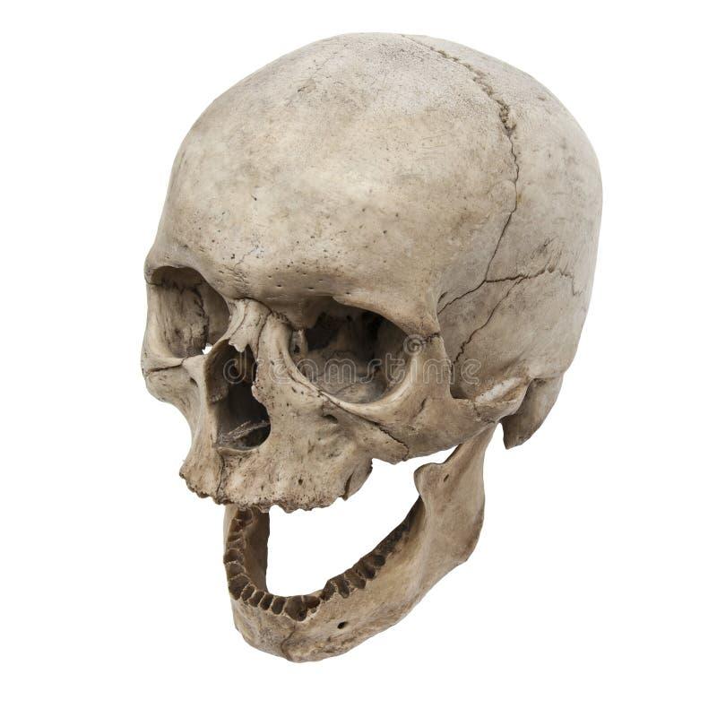 Vecchia vista umana del cranio da sopra senza i denti fotografia stock