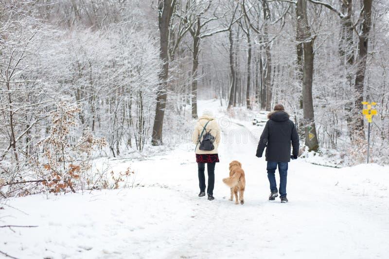 Vecchie coppie felici che camminano il loro cane dorato del retreiver con fotografia stock libera da diritti