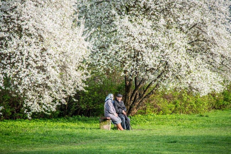 Vecchie coppie invecchiate che si siedono sotto l'albero di fioritura fotografia stock libera da diritti