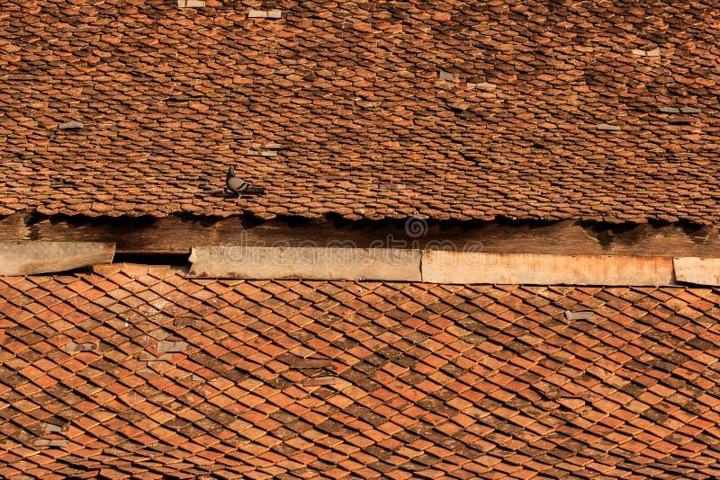 Vecchie mattonelle dell'argilla sul tetto fotografie stock