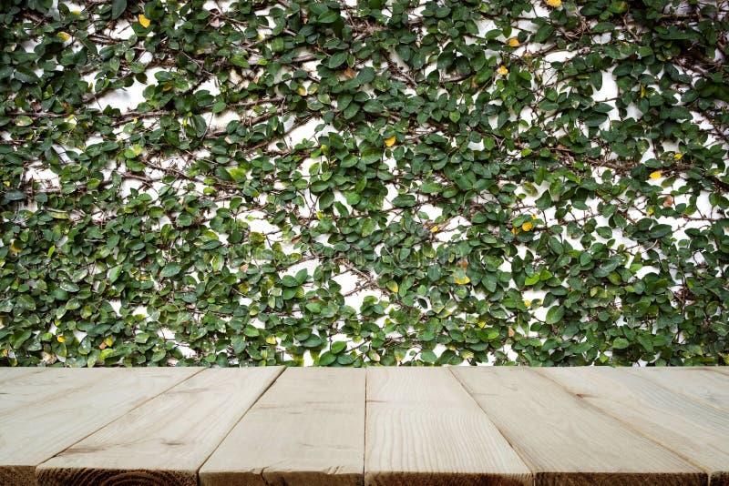Vecchie plance di legno o pavimento di legno con il muro di cemento e le piante ornamentali fotografie stock