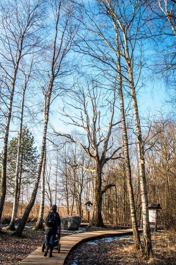Vecchie querce nude in parco fotografia stock libera da diritti