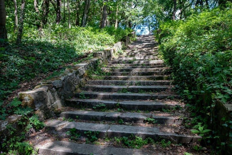 Vecchie scale trascurate della pietra nel vecchio percorso della foresta nel parco della città immagine stock