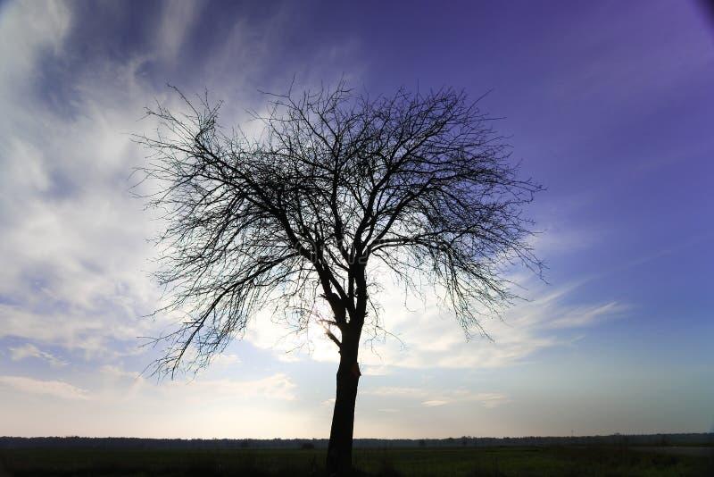 Download Vecchio albero immagine stock. Immagine di calma, pianta - 7308255