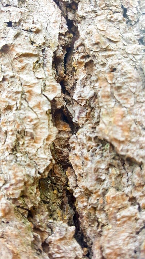 Vecchio albero fotografia stock
